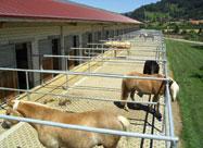 Eccli & Laimer - Ihr Partner in Sachen Landwirtschaft